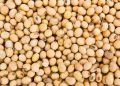 Soybean Has Set the Stage for Further Gains
